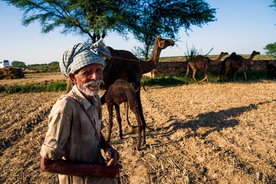 Local Farms and Gardens Color The Countryside in Jaipur
