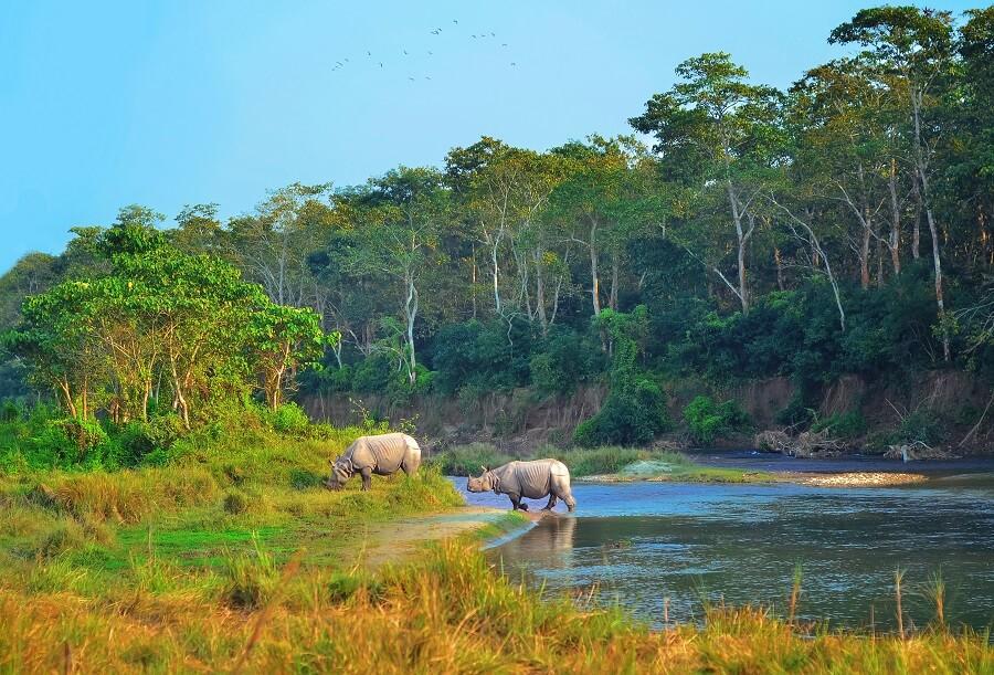 Famous Chitwan National Park, Nepal