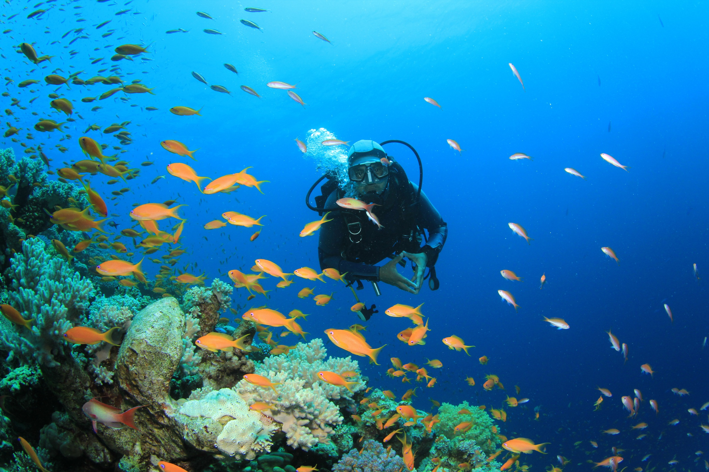 Generic Scuba diver, included tours offered by Asia Vacation Group