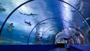 Osaka Aquarium is included in Japan tours offered by Asia Vacation Group.