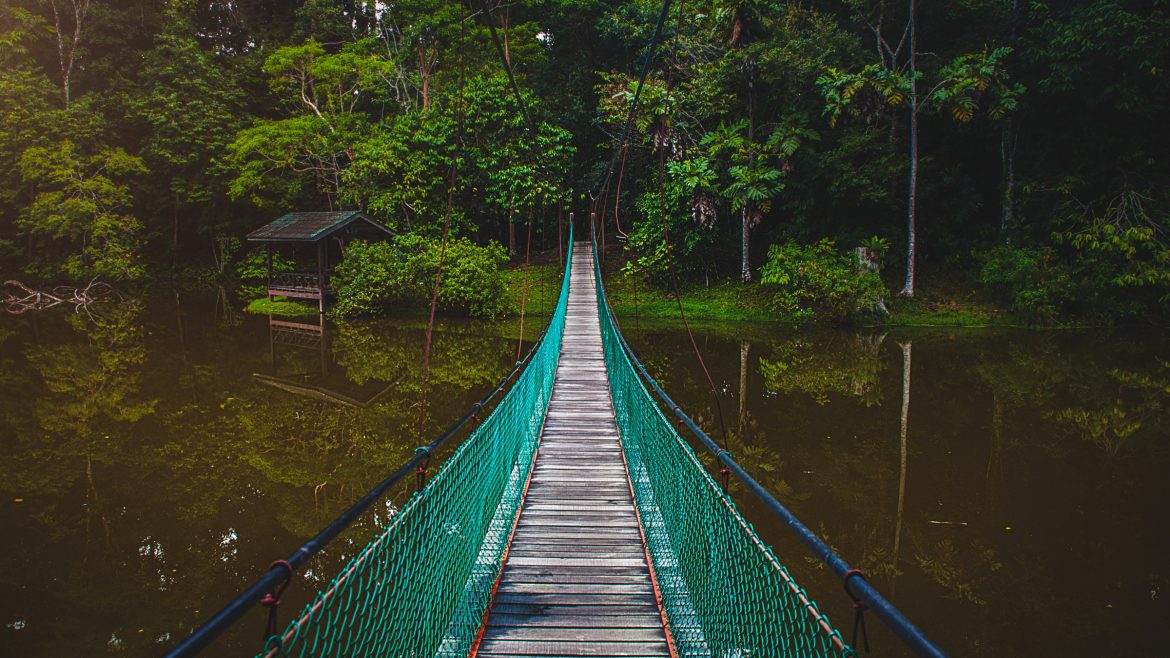Borneo Sabah Bridge in forest, included in tours offered by Asia Vacation Group