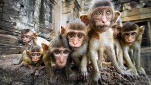 Monkeys in temple, included in tours offered by Asia Vacation Group