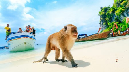 Phi Phi Island Monkey On Monkey Beach, Thailand, included in tours offered by Asia Vacation Group