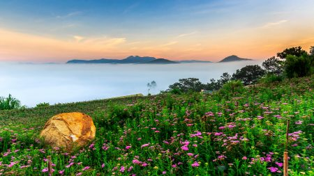 Flower field in the morning in Da Lat, included in tours offered by Asia Vacation Group