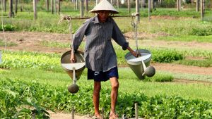 Hoian Tra que village farmer working, included in tours offered by Asia Vacation Group